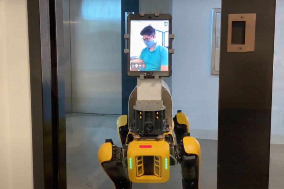 mit-robo-dogs-in-hospital-rooms-542-960x639
