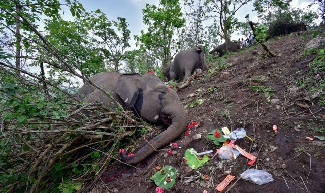 Carcasses of elephants that according to the forest officials possibly died because of a lightning strike are seen on the foothills of the Kundoli reserve forest area in Nagaon district in the northeastern state of Assam, India, May 14, 2021. REUTERS/Anuwar Hazarika